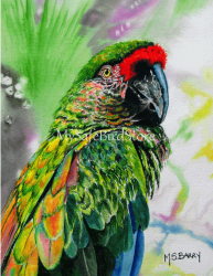 Artist Maria Barry Greeting Card Buffons Macaw