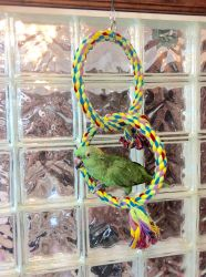 Polly's Pet Products Double Ring Swing Lg