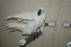 Polly's Pet Products Deluxe Shower Perch Large